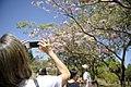 Senado Federal do Brasil Fotos produzidas pelo Senado (15023569849).jpg