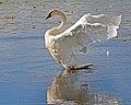 Seney National Wildlife Refuge - Wildlife (9705215406).jpg