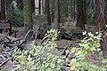 Sequoya National forest Giant Forest en2016 (30).JPG