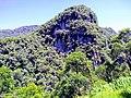 Serra do Mar - Primavera em Morretes-PR.jpg