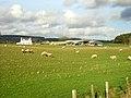 Sheep at Nether Garrel Farm - geograph.org.uk - 287607.jpg