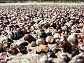 Shells on Bherwerre Beach.jpg