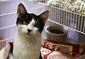 Shleter kitten 6.jpg