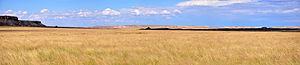 Shortgrass prairie - Shortgrass Prairie