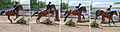 Show jumping sequence, Delaware.jpg