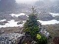 Sierra de las Nieves (3220642659).jpg