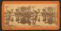 Silver Springs on the Oklawaha River, from Robert N. Dennis collection of stereoscopic views 2.png