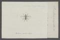 Simulia - Print - Iconographia Zoologica - Special Collections University of Amsterdam - UBAINV0274 038 05 0005.tif