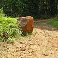 Sinharaja Rain Forest, Sri Lanka - panoramio (8).jpg