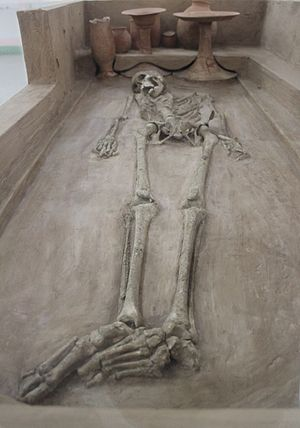 Rakhigarhi - A skeleton from Rakhigarhi on display in the National Museum.