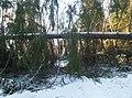 Skogsväg, Pellemossen, Norrtälje, 2019-01-08.jpg