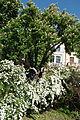 Skver-Shevchenka-15057289.jpg