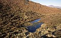 Small tarn on Woodland Fell - geograph.org.uk - 1015594.jpg