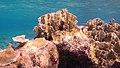 Snorkeling Karpata Reef, Bonaire (12842363164).jpg
