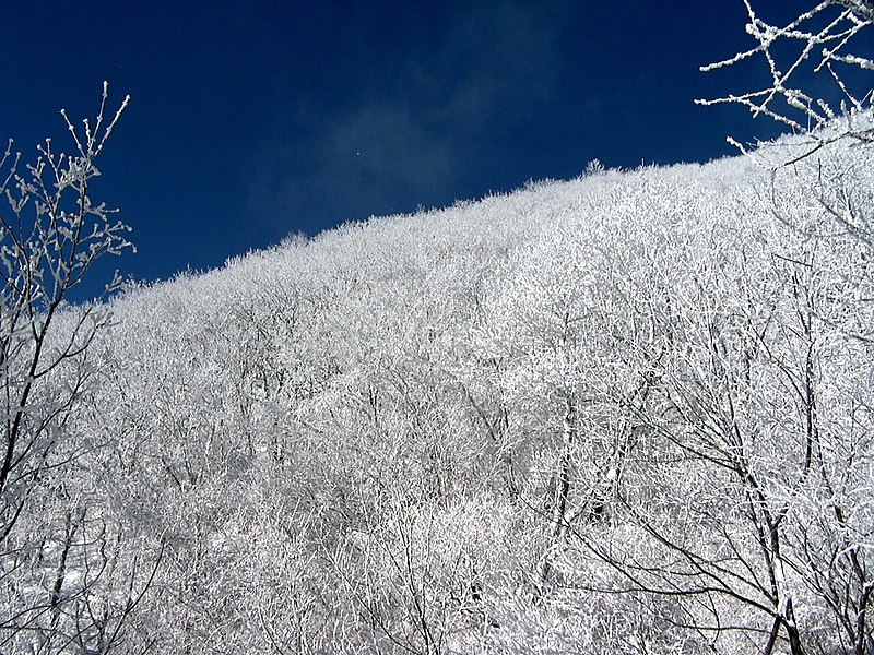 파일:Snow in Sobaeksan national park.jpg