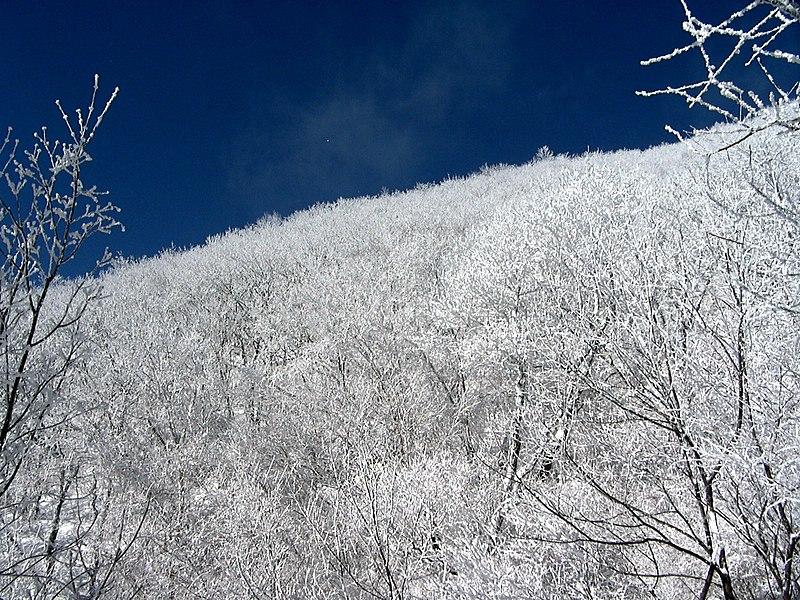 File:Snow in Sobaeksan national park.jpg