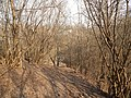 Sovetskiy rayon, Bryansk, Bryanskaya oblast', Russia - panoramio (207).jpg