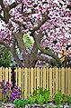 Spring Discovery (17382294212).jpg