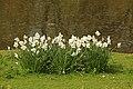 Spring in London (7116605477).jpg