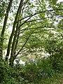Springbrook Creek 01.jpg