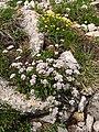 St. Moritz Hike-22 (9709683270).jpg