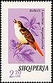 Stamp of Albania - 1974 - Colnect 301832 - Common Nightingale Luscinia megarhynchos.jpeg