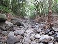 Starr-130311-2100-Syzygium cumini-habitat after flood-Maliko Gulch-Maui (25088432152).jpg