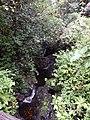 Starr-141027-2635-Clidemia hirta-habitat of little fire ants in stream-Nahiku-Maui (24952485420).jpg