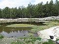 Starr-150331-1036-Cyperus polystachyos-pond-Brackish Pond Sand Island-Midway Atoll (25245554646).jpg