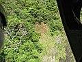 Starr-151005-2451-Acacia koa-aerial view landslide-West Maui-Maui (26010276970).jpg