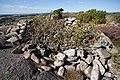 Stensättning i Tanums kommun.jpg
