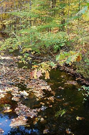 Stillwater River (Nashua River) - Stillwater headwaters near Princeton