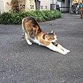 Stretching (22240212846).jpg
