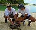 Studying sea turtles 121016-N-GZ638-086.jpg
