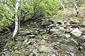 Suťový les na jižním svahu Milešovky (002).JPG