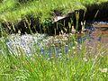 Summer meadow beside the stream - July 2012 - panoramio.jpg