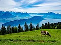 Swiss View.jpg