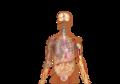 Symptoms of coronavirus disease 2019 2.0-vi.png