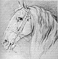 Tête de cheval E Bouchardon musée Fabre 49556.jpg