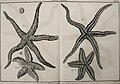 Tableau encyclopédique et méthodique des trois règnes de la nature (1791) (14764967631).jpg