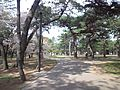 Takashi-Ryokuchi Park - Pine trees2.jpg