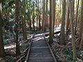 Tamborine Mountain Botanic Gardens 04.JPG