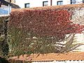 Tarnow jesien.jpg