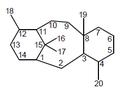 Taxano - Numeración.png