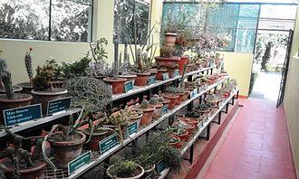 Teak Museum - Cactus Collection