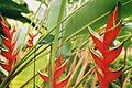Tel Aviv Botanic Garden (440519901).jpg