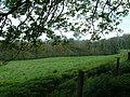 Temple Wood near Selborne - geograph.org.uk - 163823.jpg