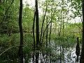 Teufelsbruch swamp next to crossing path in summer 13.jpg