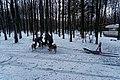 Texel - Dunningsweg - Preparation of Sled dogs I.jpg