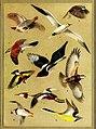 The British bird book (1921) (14753233604).jpg